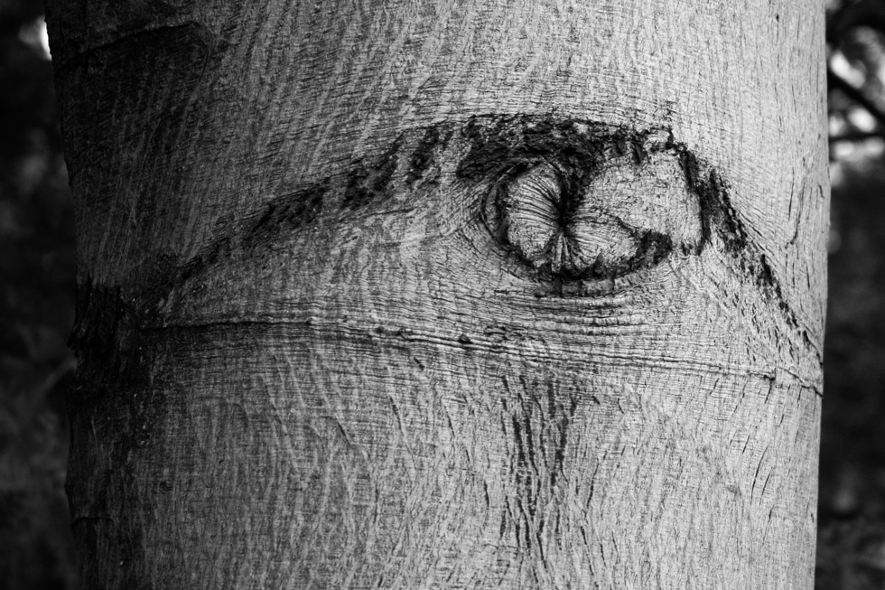 The eye in the tree.